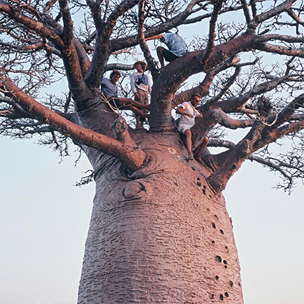 Expeditioners atop a 20m tall baobab in Madagascar: not every travel health risk is predictable